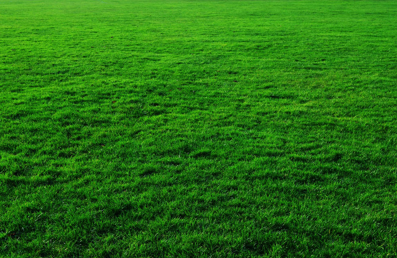 turf Brisbane - landscape supplies Brisbane